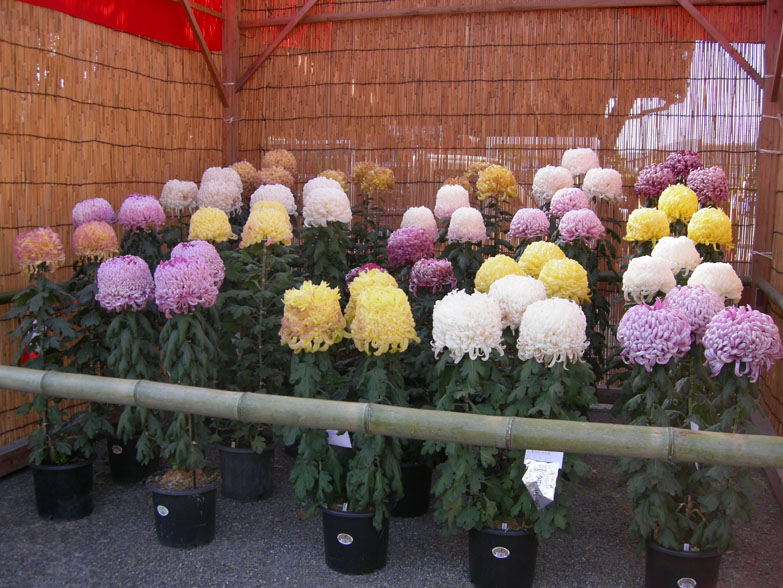 Стакан для цветов своими руками 84