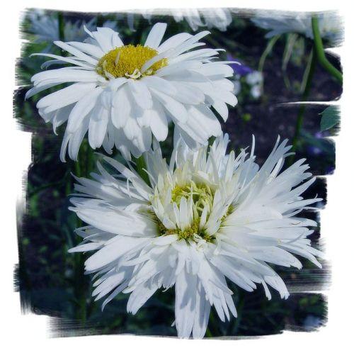http://all-flowers.ucoz.ru/_ph/5/2/127897888.jpg